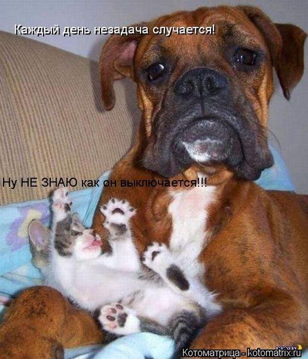 Домашние животные смешные фото025