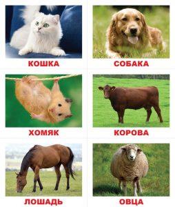 Животные леса фото и названия для детей 023