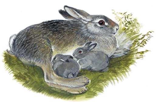 Год петуха, заяц с зайчатами картинки для детей