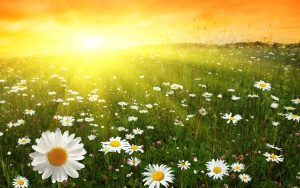 Заставка на рабочий стол   лето, природа, цветы (14)