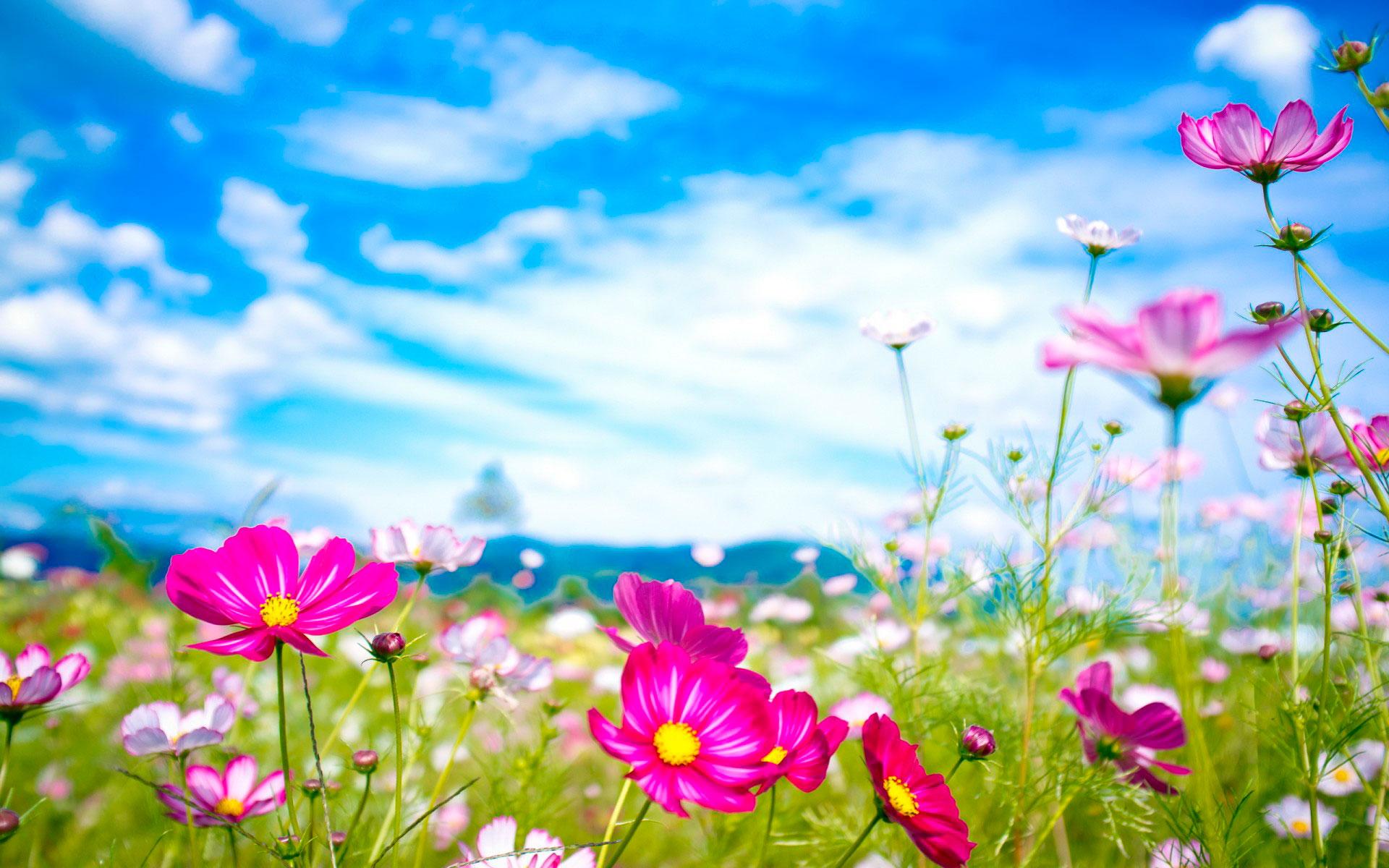 Красивые картинки с природой и цветами на телефон