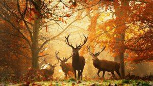 Заставка на рабочий стол осень в лесу   подборка обоев (23)