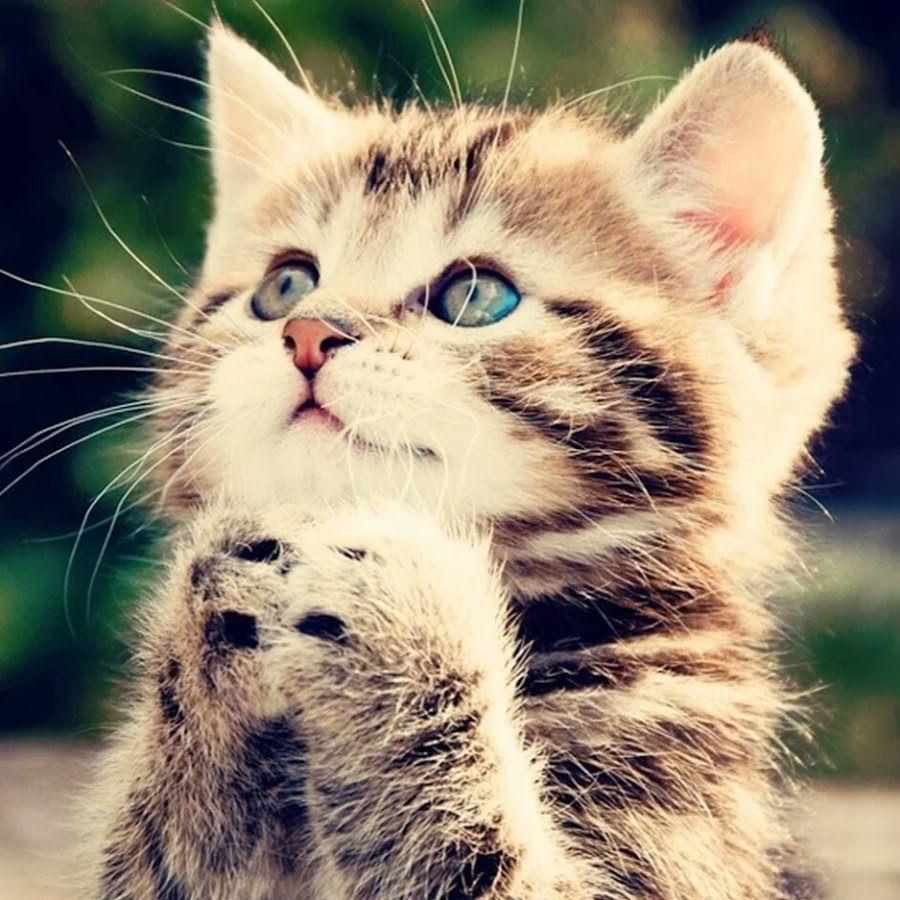 Заставки на телефон котята   милые и смешные (1)