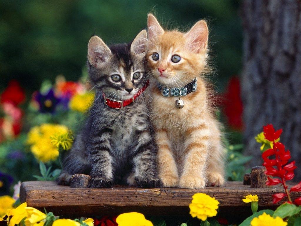 Заставки на телефон котята   милые и смешные (12)