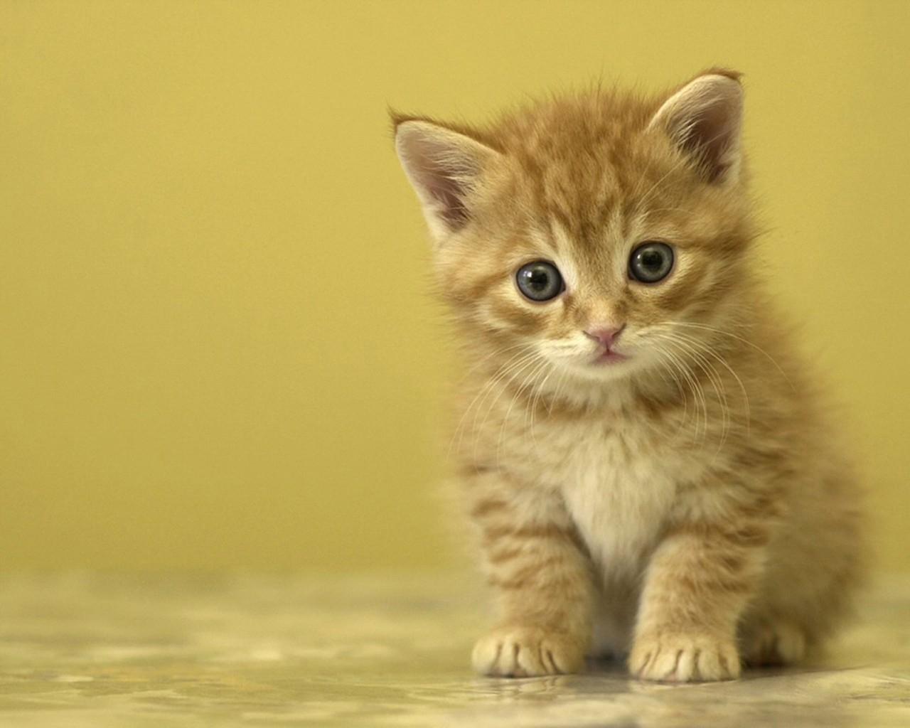 Заставки на телефон котята   милые и смешные (13)