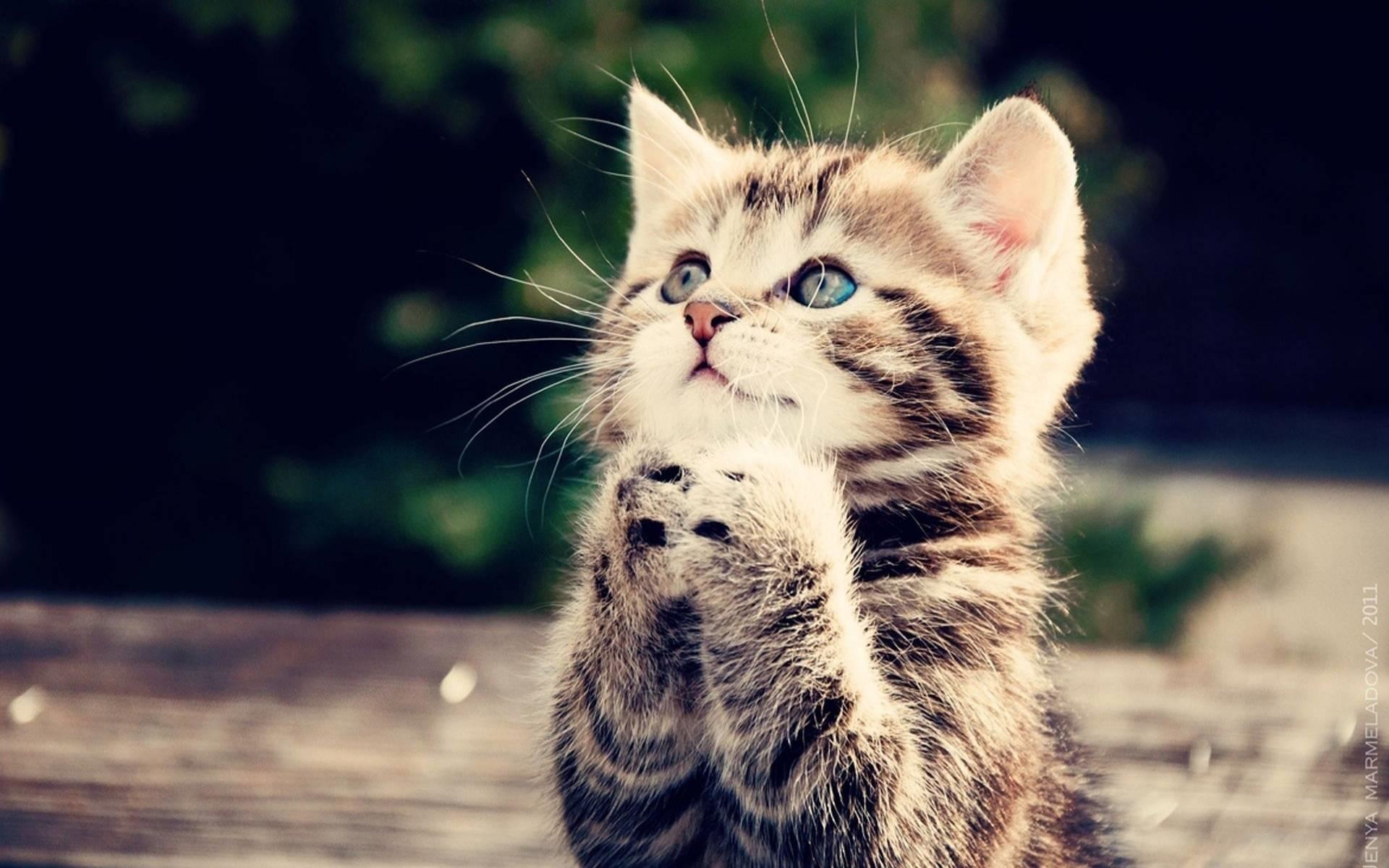 Заставки на телефон котята   милые и смешные (14)