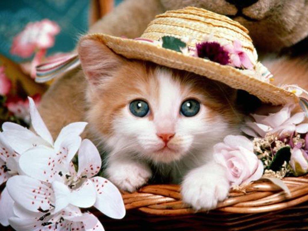 Заставки на телефон котята   милые и смешные (16)