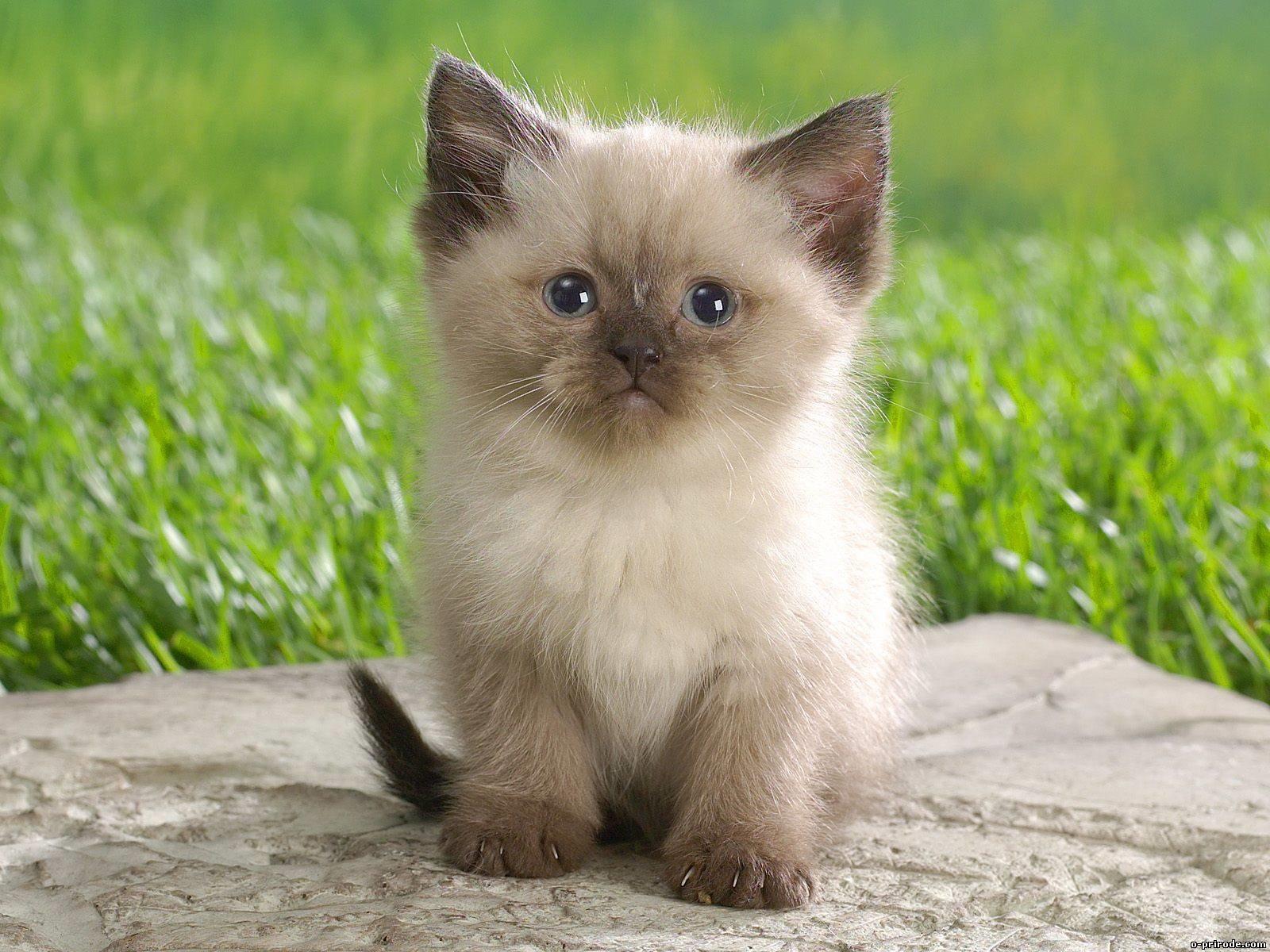 Заставки на телефон котята   милые и смешные (17)