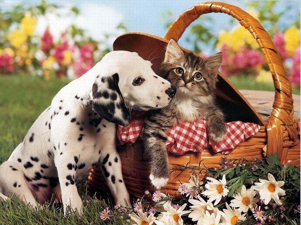 Заставки на телефон котята   милые и смешные (19)