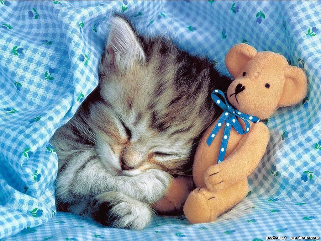 Заставки на телефон котята   милые и смешные (2)