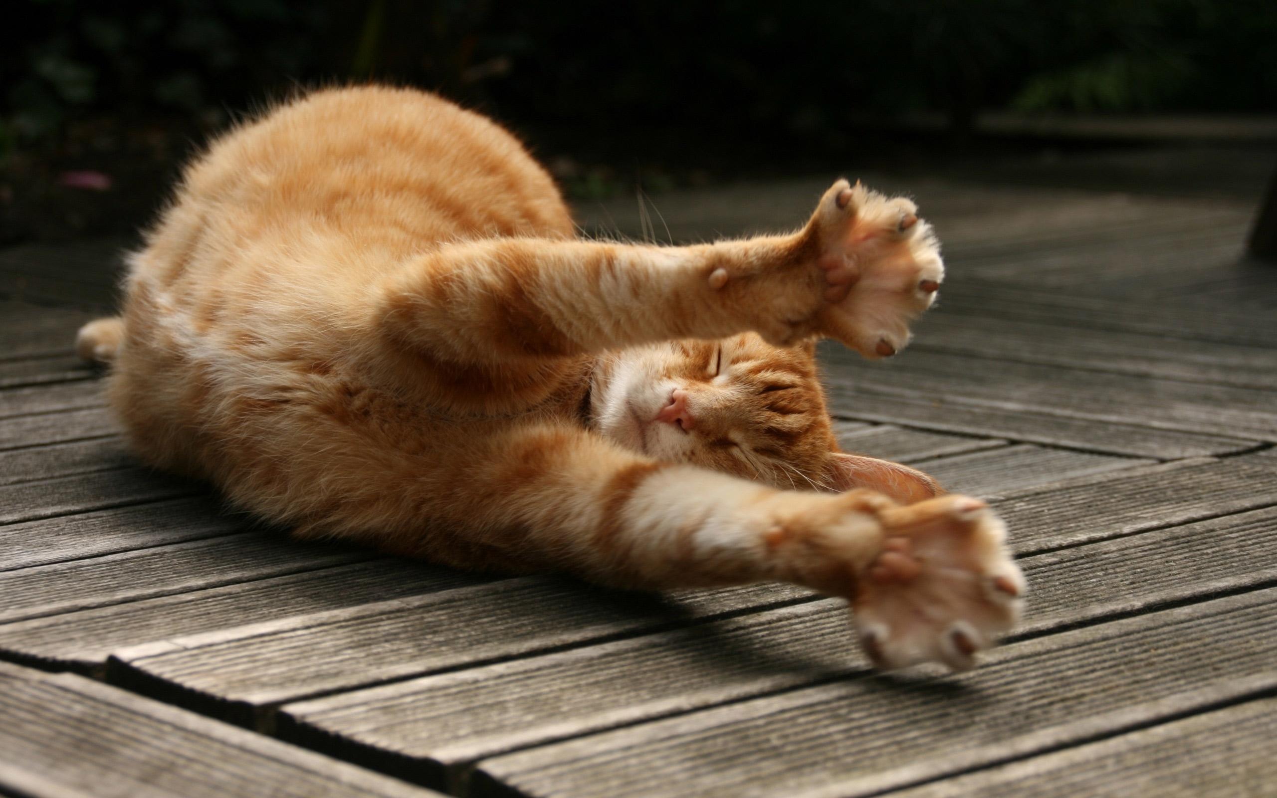 Заставки на телефон котята   милые и смешные (21)