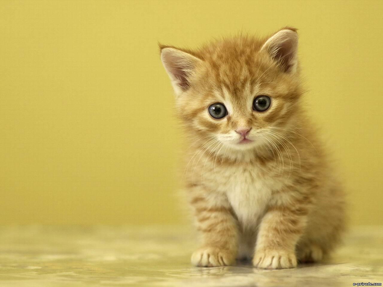 Заставки на телефон котята   милые и смешные (23)
