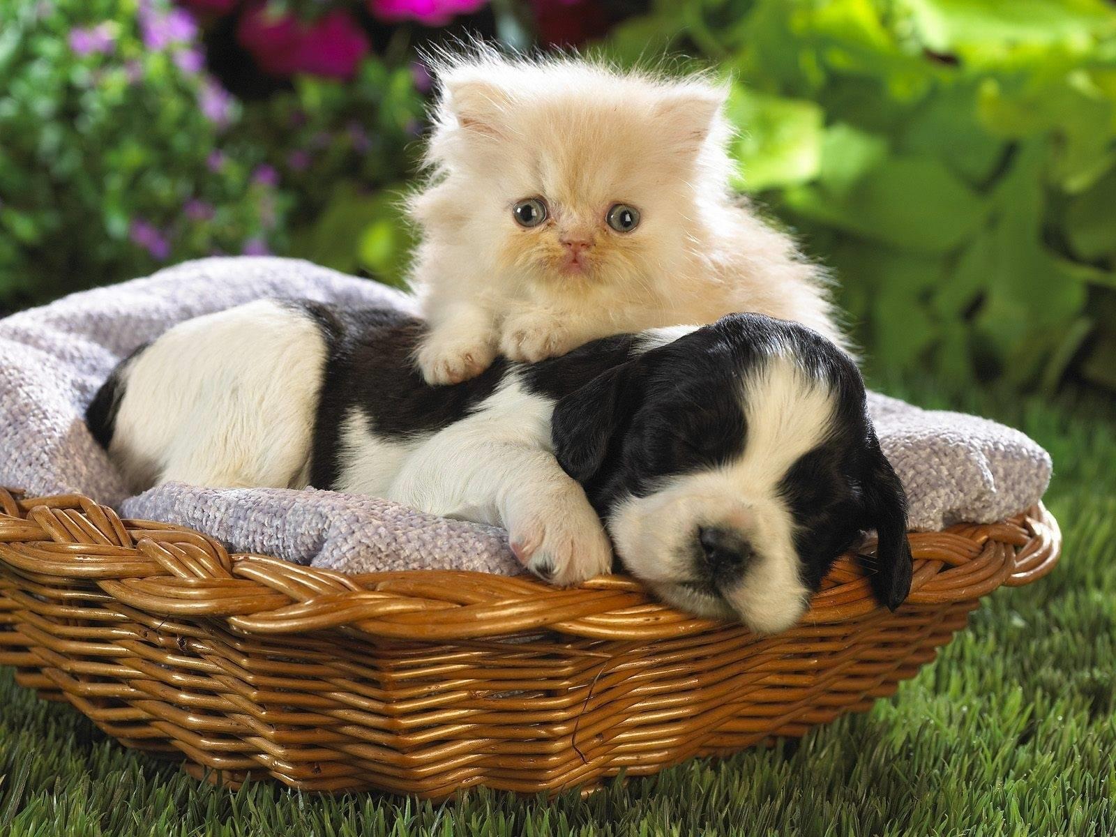 Заставки на телефон котята   милые и смешные (24)