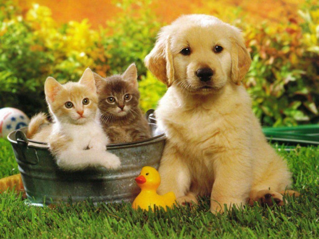 Заставки на телефон котята   милые и смешные (25)