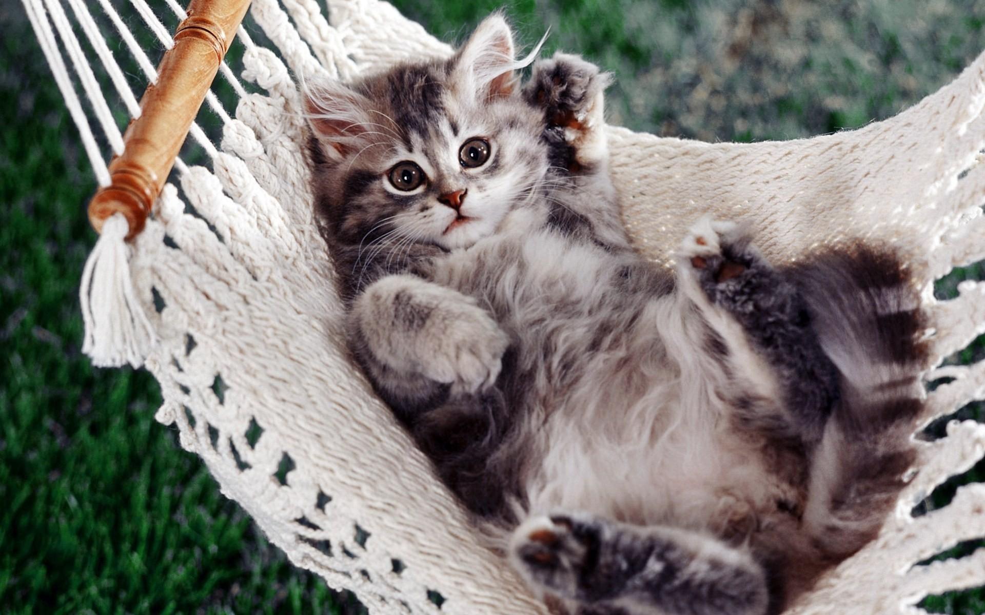 Заставки на телефон котята   милые и смешные (26)