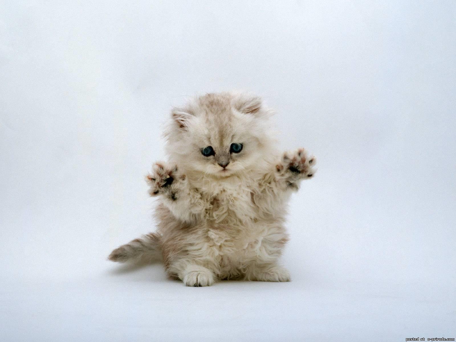 Заставки на телефон котята   милые и смешные (28)