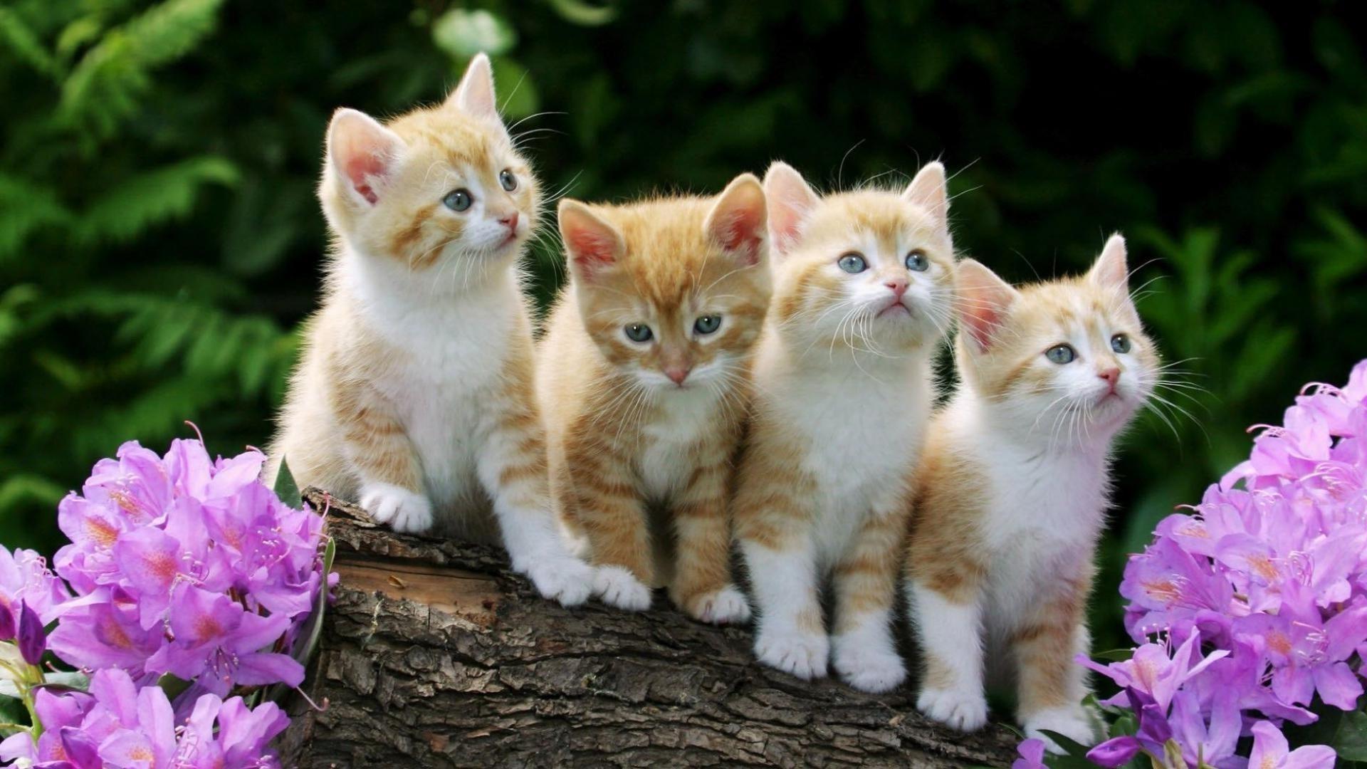 Заставки на телефон котята   милые и смешные (29)