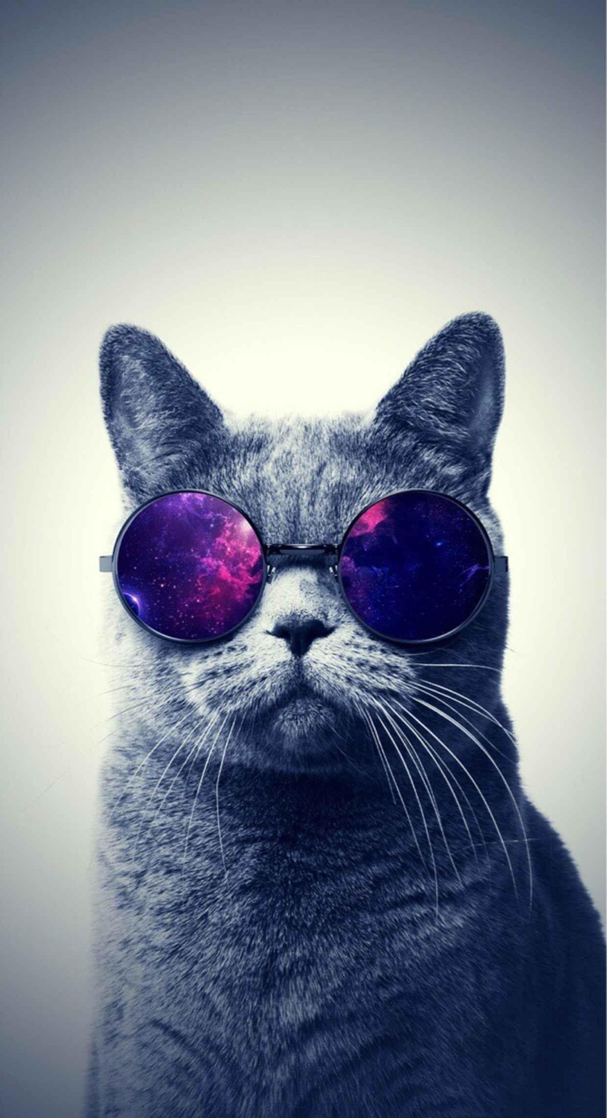 Заставки на телефон котята   милые и смешные (3)