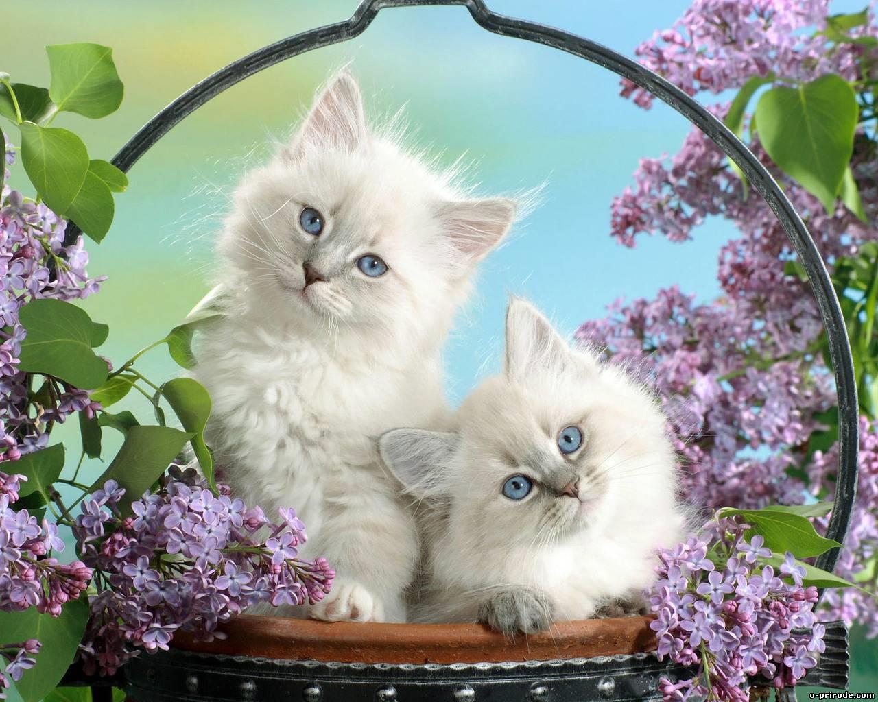 Заставки на телефон котята   милые и смешные (4)