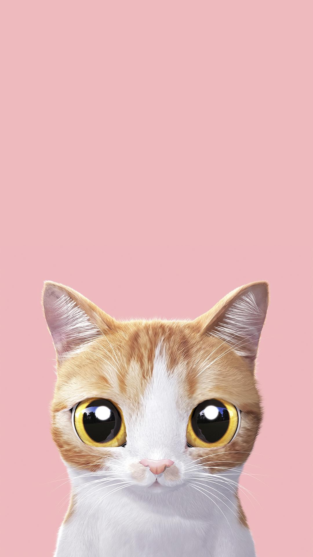 Заставки на телефон котята   милые и смешные (5)