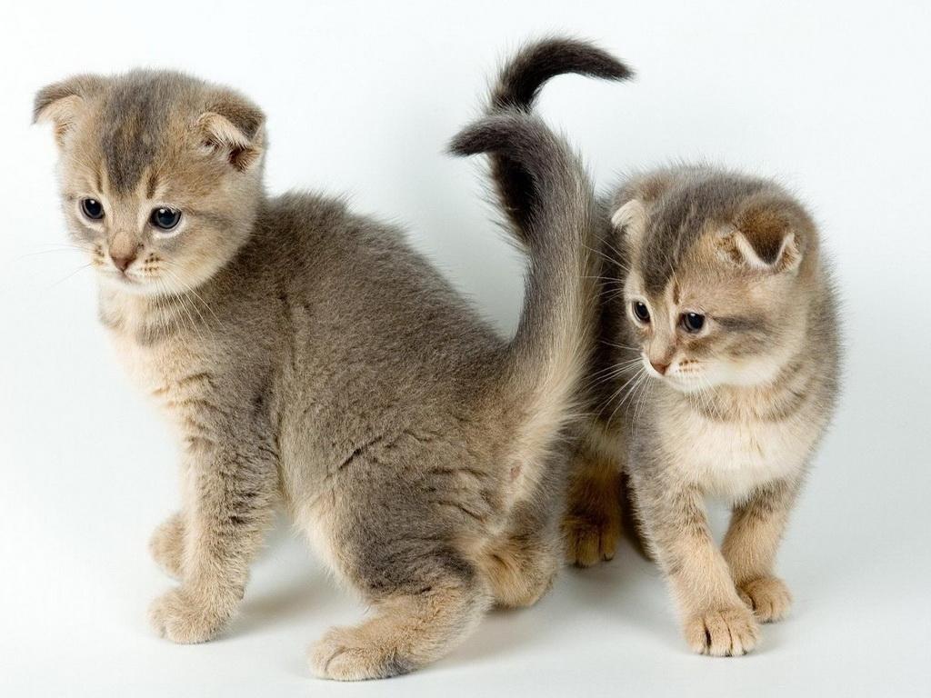Заставки на телефон котята   милые и смешные (6)