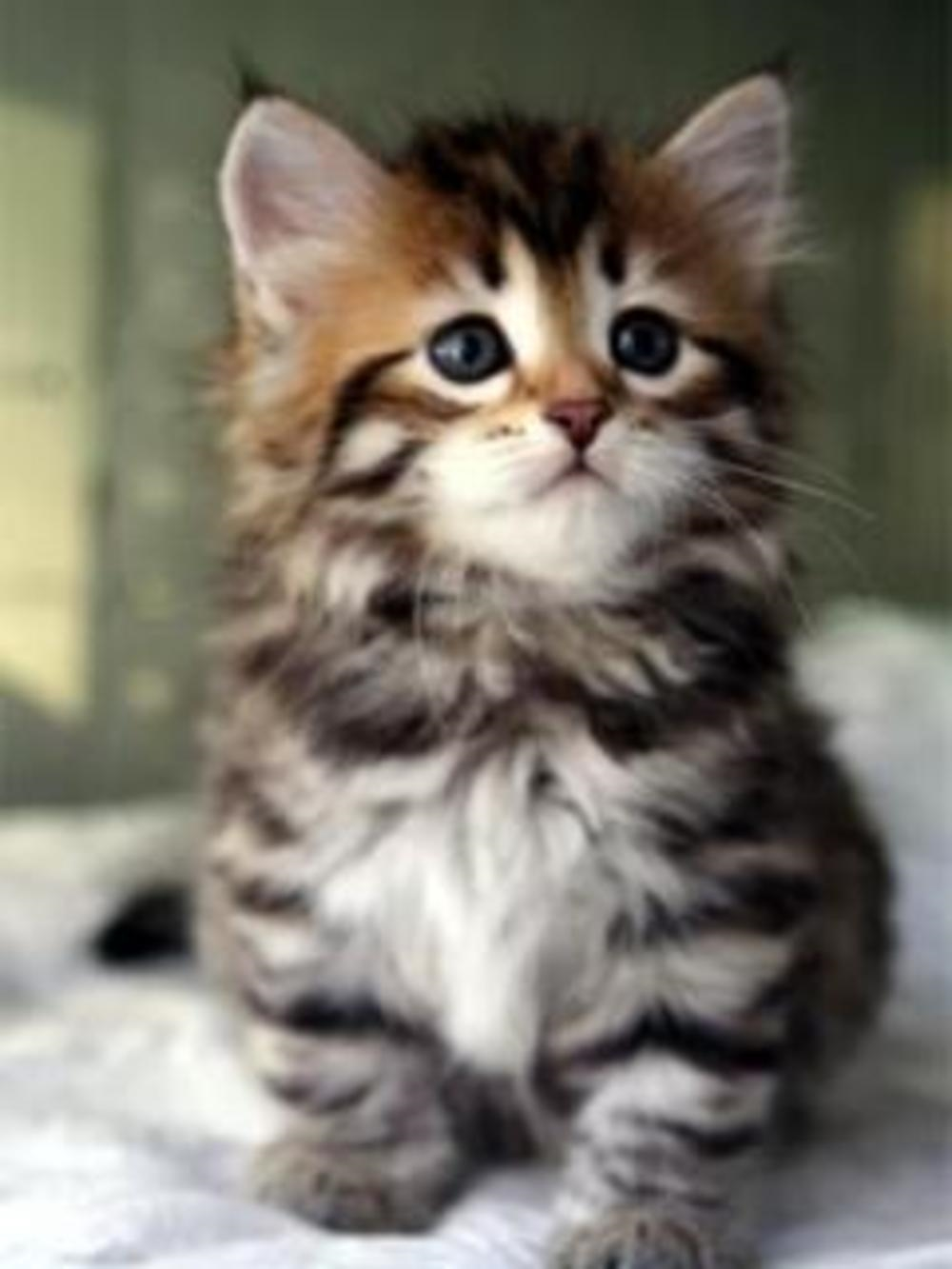 Заставки на телефон котята   милые и смешные (7)