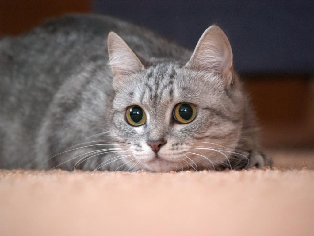 Заставки на телефон котята   милые и смешные (9)