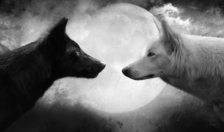 Заставки на телефон скачать волки (13)