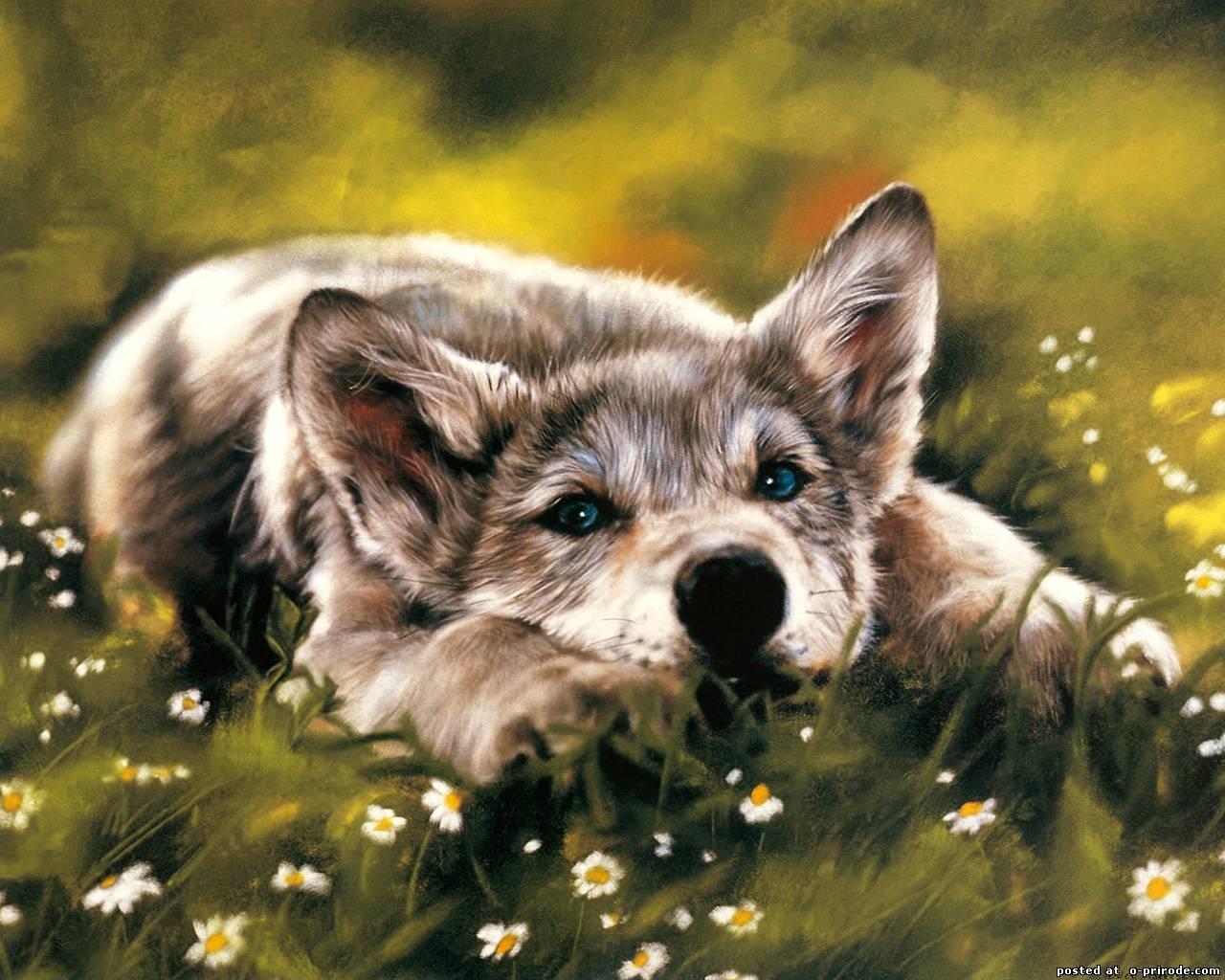 Заставки на телефон скачать волки (9)