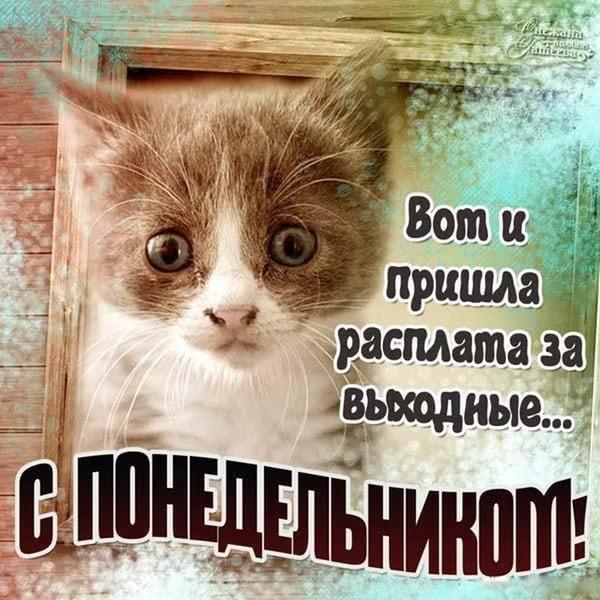 Здравствуй понедельник картинки прикольные 010