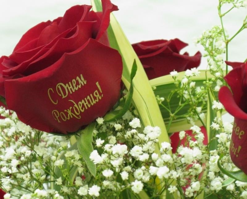 индира картинки с розами садоводов