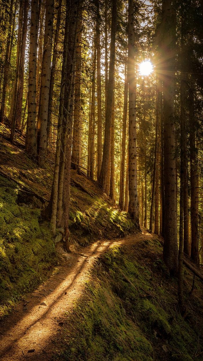 Скачать Обои На Телефон Бесплатно Лес