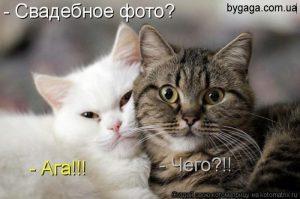 Интересные рисунки с котами   прикольные 029