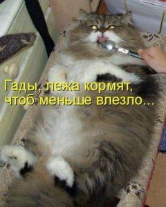 Интересные фото кошек с надписями 028