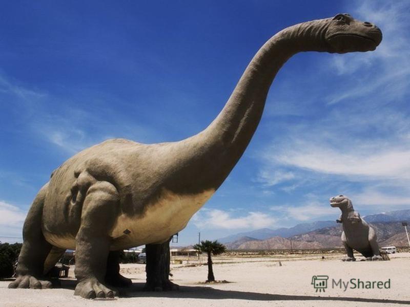 Какие были раньше динозавры   картинки 009