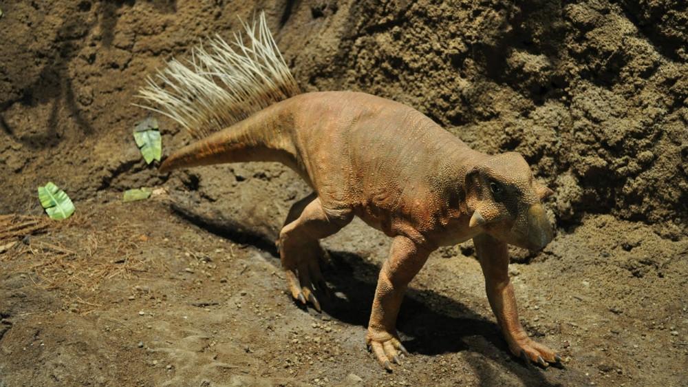 Какие были раньше динозавры   картинки 010