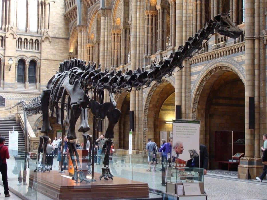 Какие были раньше динозавры   картинки 016