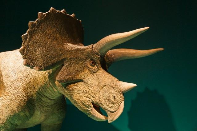 Какие были раньше динозавры   картинки 021