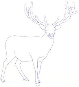 Как нарисовать лося карандашом поэтапно для детей   рисунки028