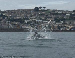 Как рисовать дельфинов в море   подборка 023