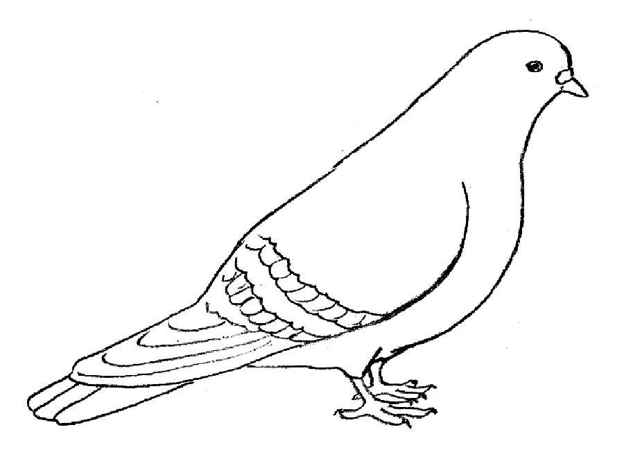 Картинка голубя для детей   подборка 009