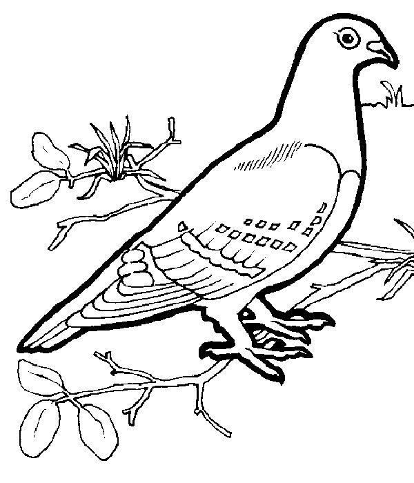 Картинка голубя для детей   подборка 011