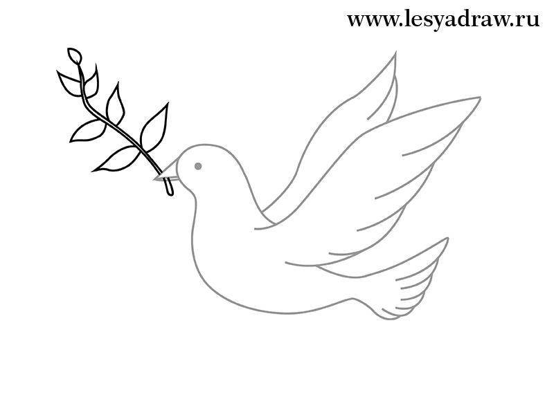 Картинка голубя для детей   подборка 014