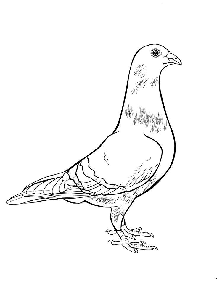 Картинка голубя для детей   подборка 023