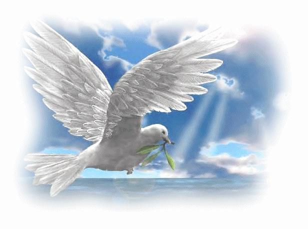 Картинка голубя для детей   подборка 026