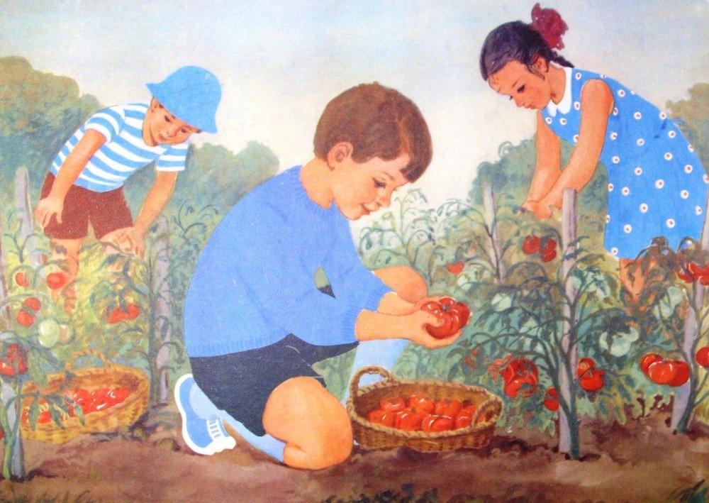 Доброе, картинки сбор урожая на огороде