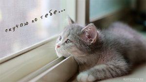 Картинка любимый котик мой   подборка020