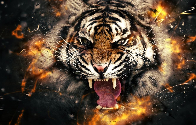 Картинка на рабочий стол тигр (14)