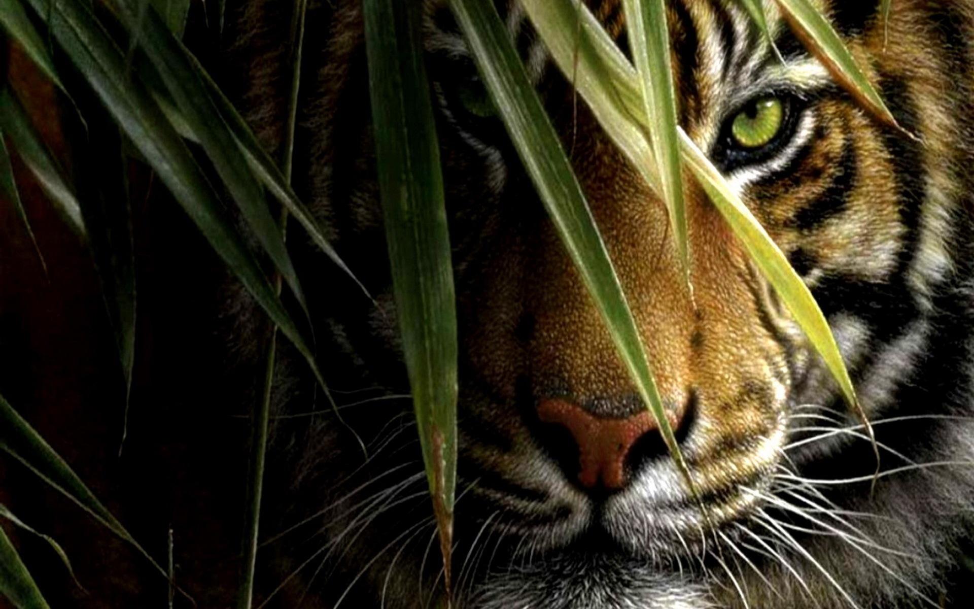 Картинка на рабочий стол тигр (17)