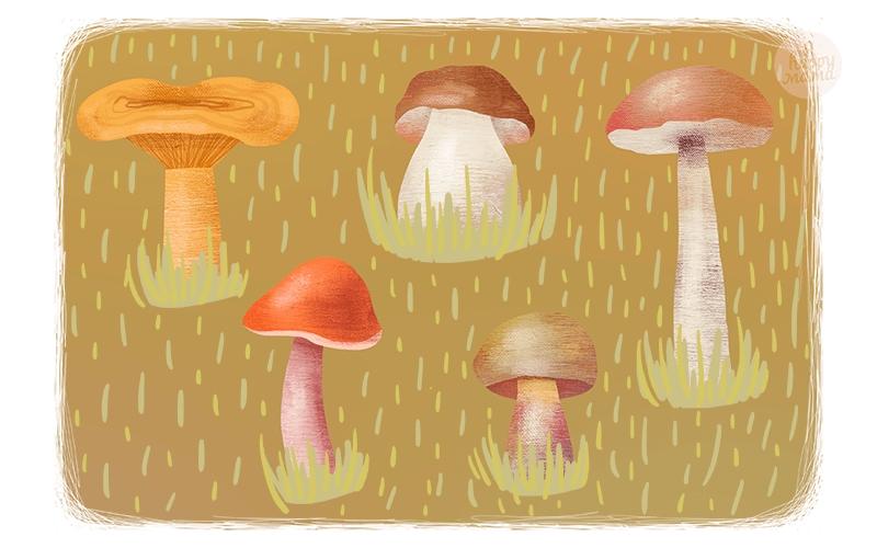 Картинка рыжик гриб для детей   подборка 007